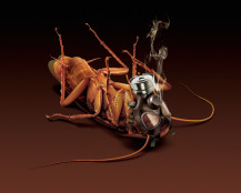 Pif Paf Roach2