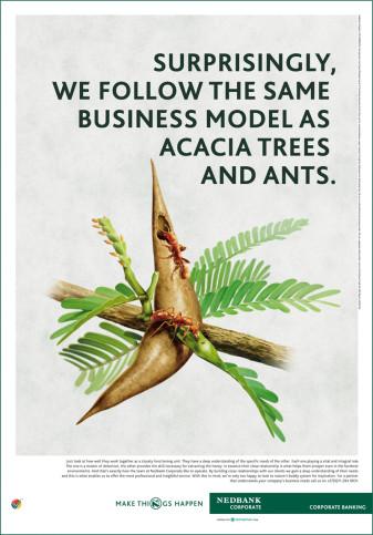 Nedbank Ant Acacia