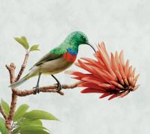 Nedbank Sunbird